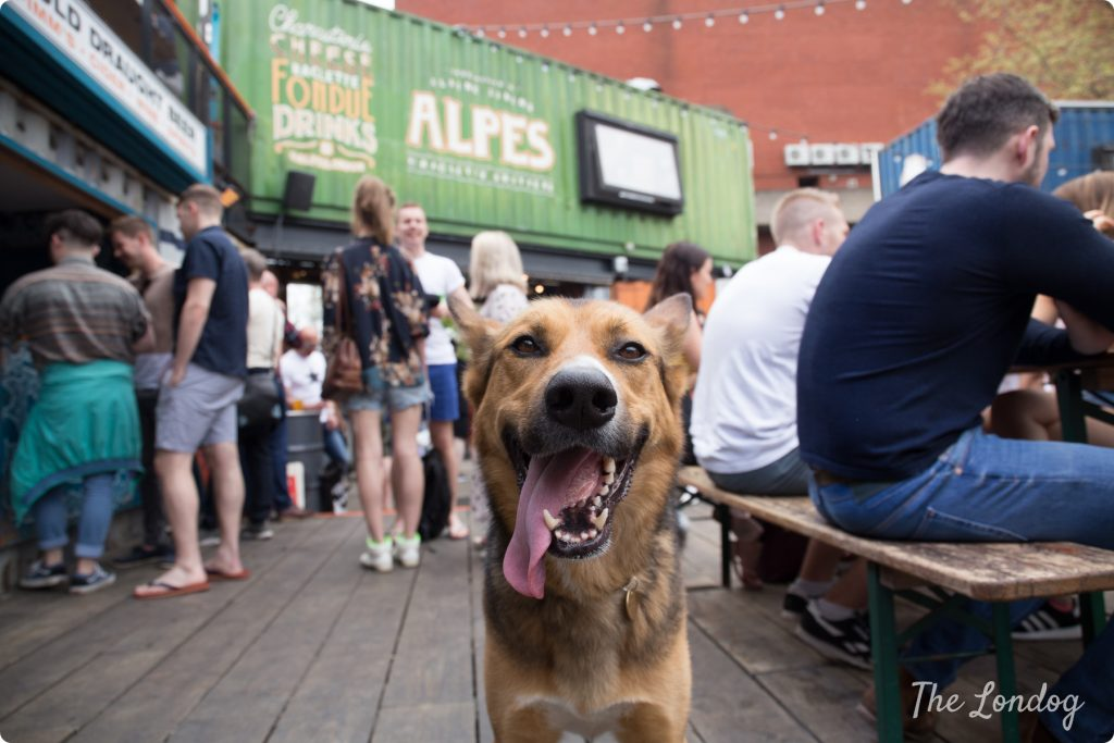 Dog at beer garden