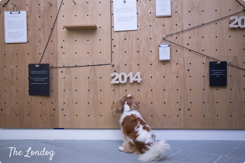 TransferWise London office dog looking at wooden board