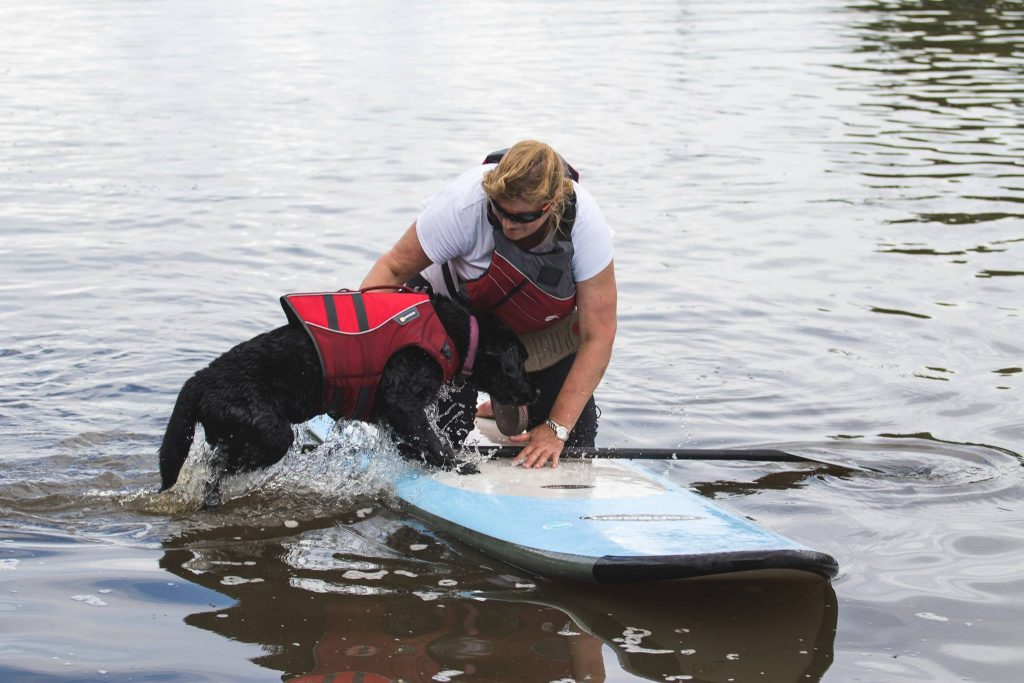Dog getting on a paddle board with his owner on the Thames in London