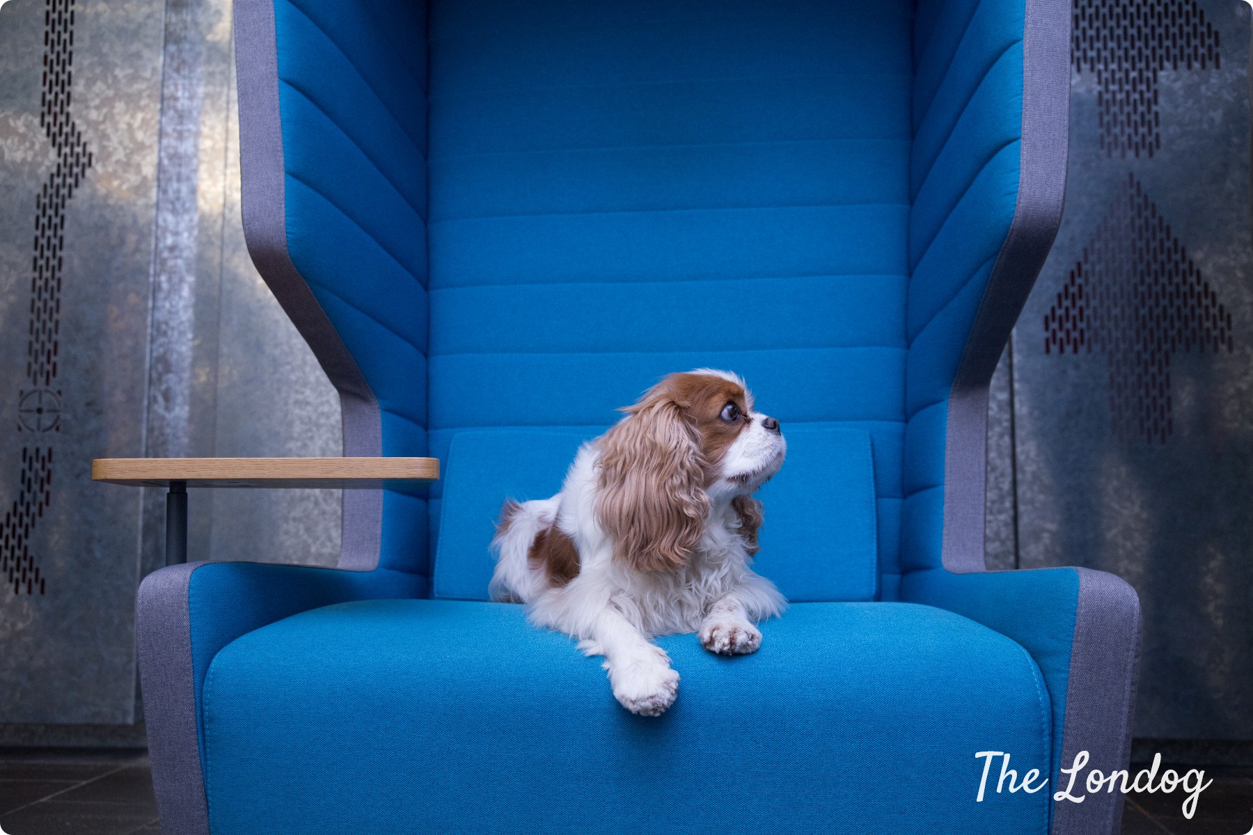 office dog lays on a blue swinging chair at TransferWise offices in London