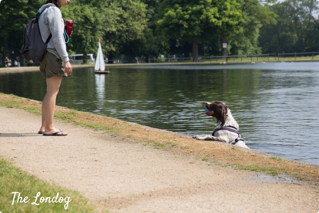 Dog bathing at Clapham Common pond