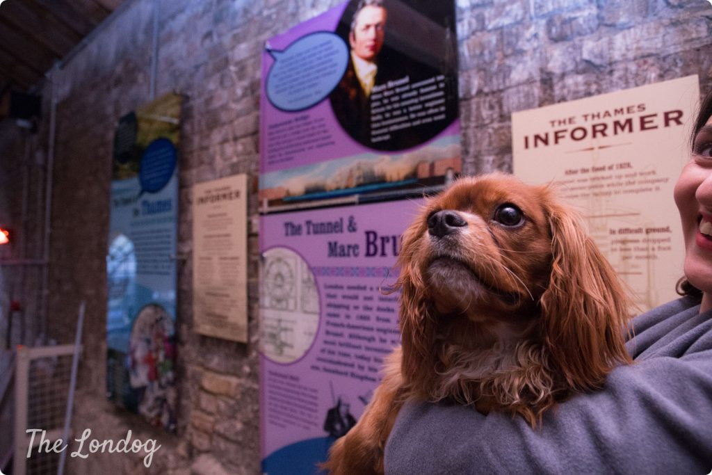 Cavalier dog at Brunel Museum