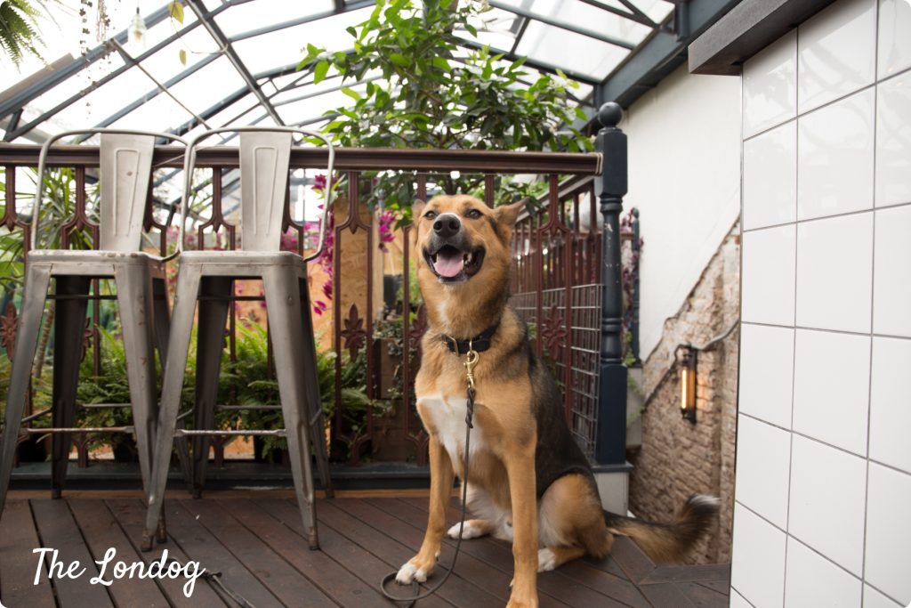 Dog-friendly rooftops in East London