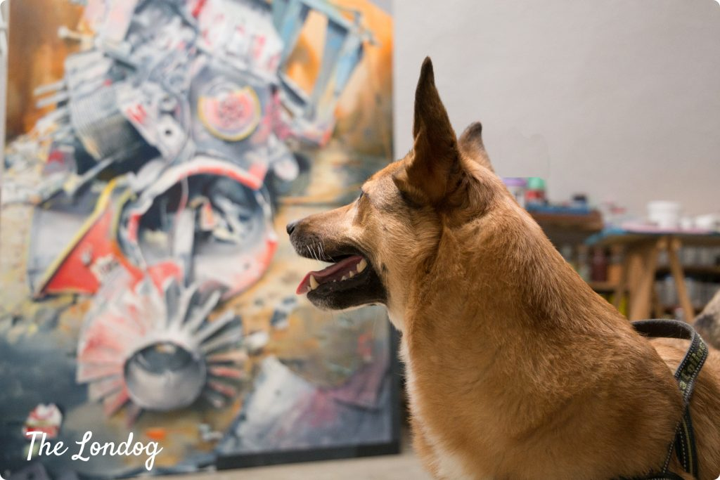 Studio dog looks at a painting
