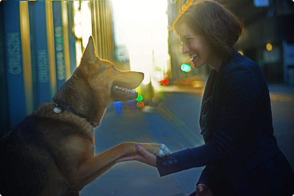 Dog gives paw to his owner at sunset in the city