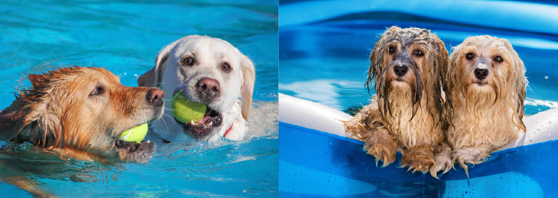 the pooch paw-trait and pool party