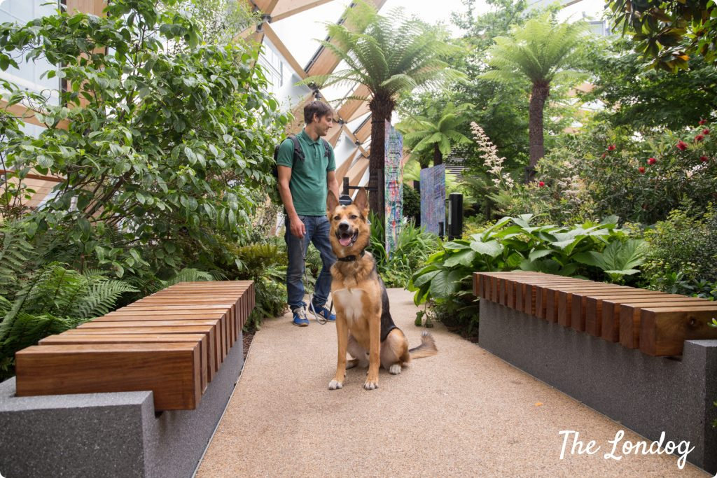 Dog at Crossrail Place Rooftop Gardens