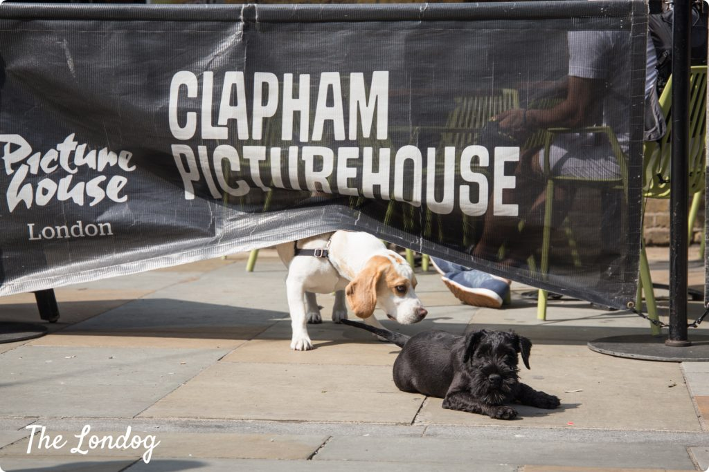Dogs outside the dog cinema at Clapham Common