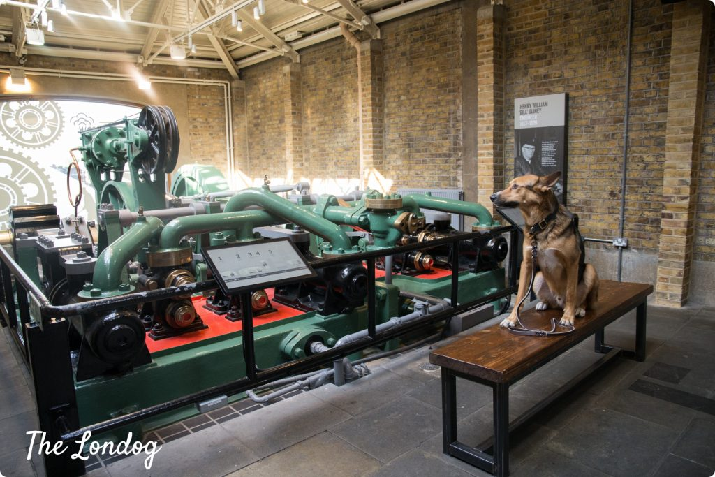 Dog in the engines room at Towe Bridge
