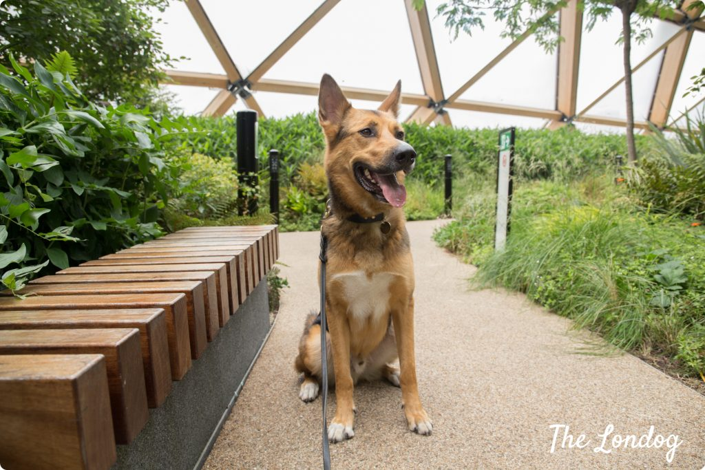 Dog-friendly Crossrail Place Rooftop Garden