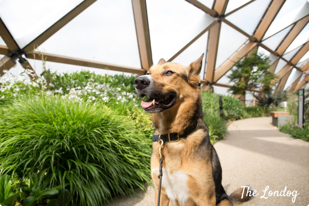 Dog-friendly Crossrail Rooftop Garden for OGSW