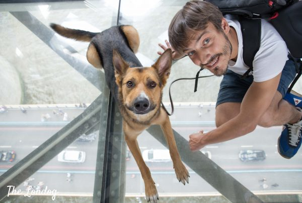 Dog and man on glass floor at dog-friendly Tower Bridge