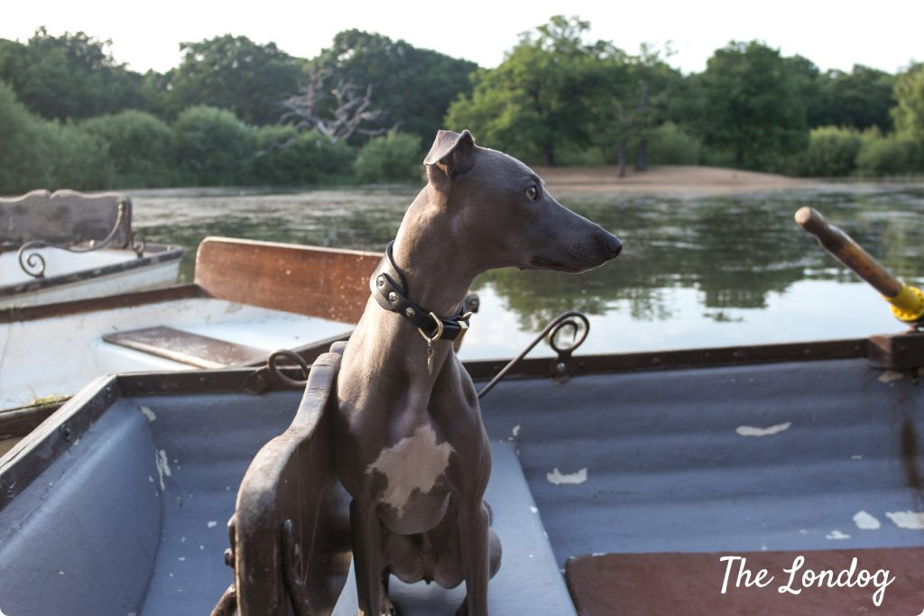 Dog-friendly rowing boat at Hollow Ponds in East London