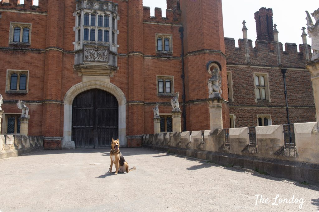 Dogs at Hampton Court Palace
