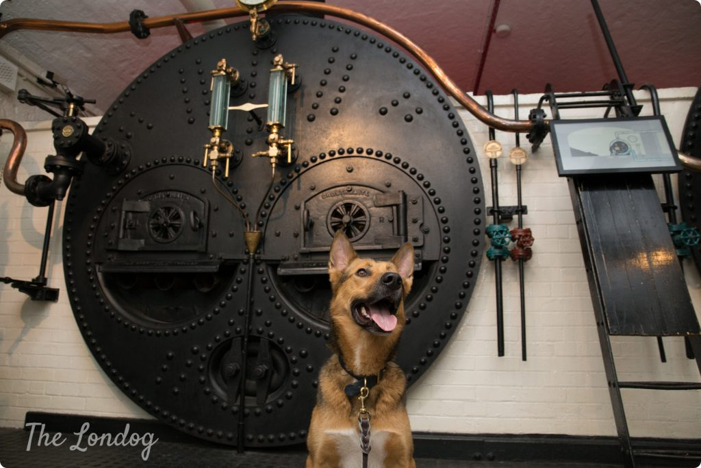 Dog in the engine rooms