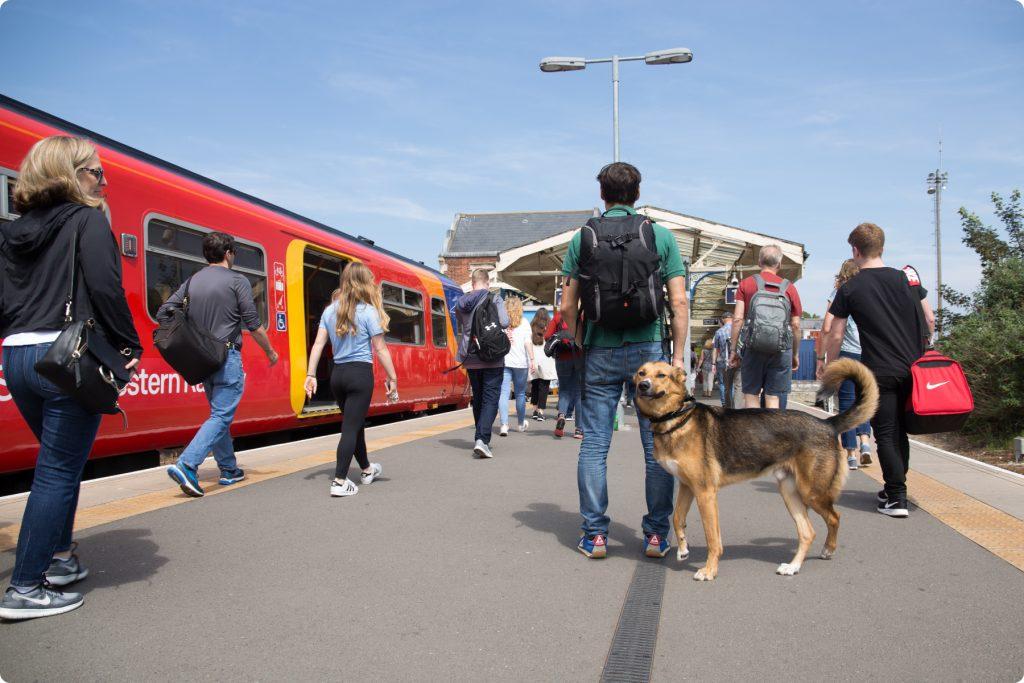 Dog walking at Hampton Court station