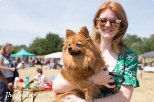 Pomeranian at Mudchute Dog Show