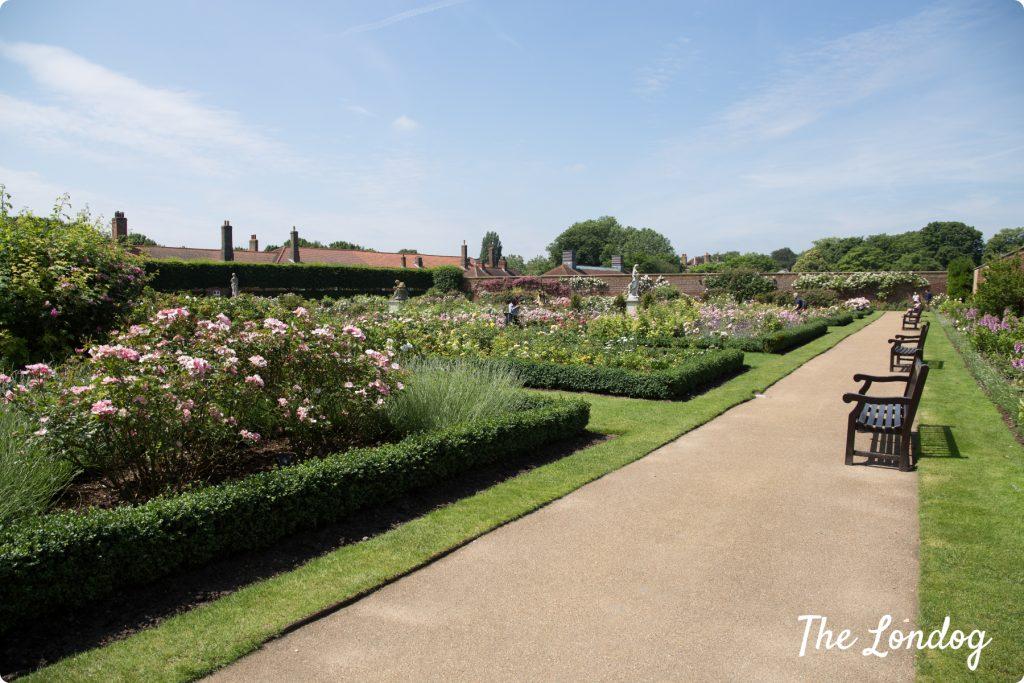 Rose Garden at Hampton Court Palace