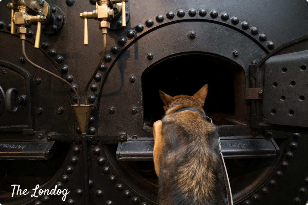 Dog looking into the steam engine at Tower Bridge