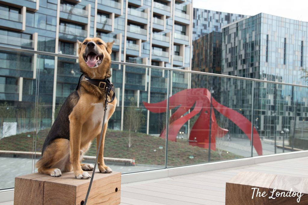 Dog at the Tide in North Greenwich