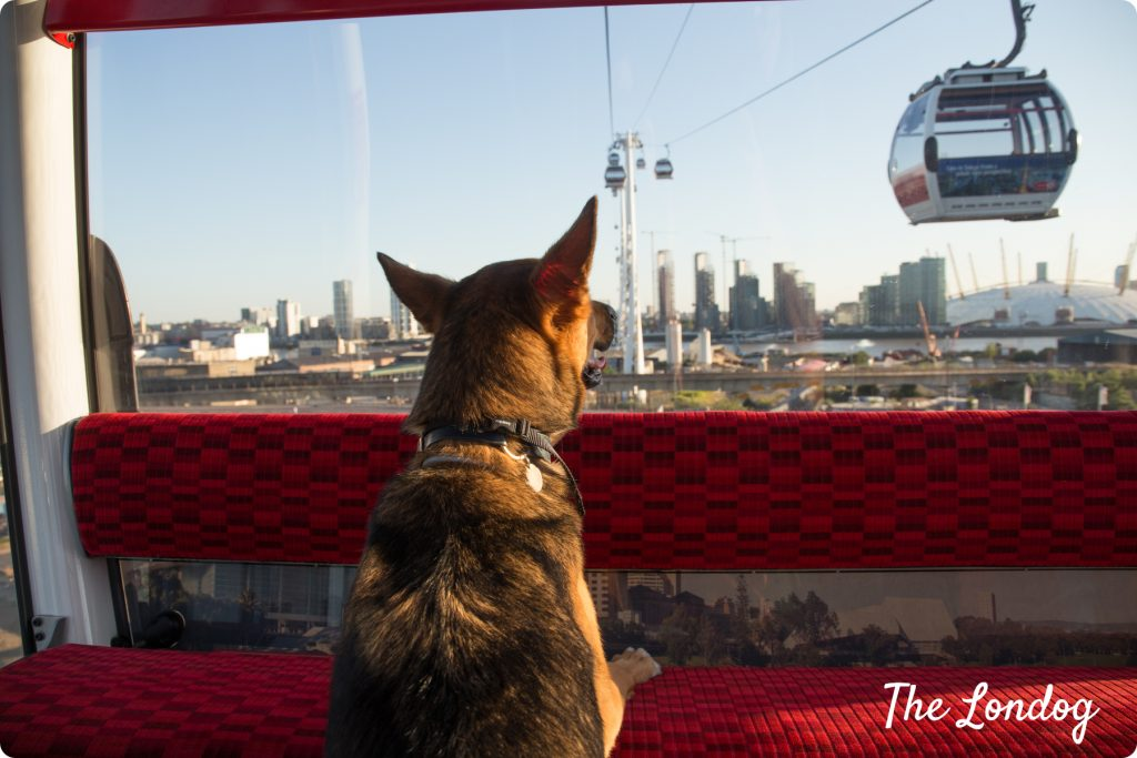 Dog-friendly Emirates Air Line cable car London