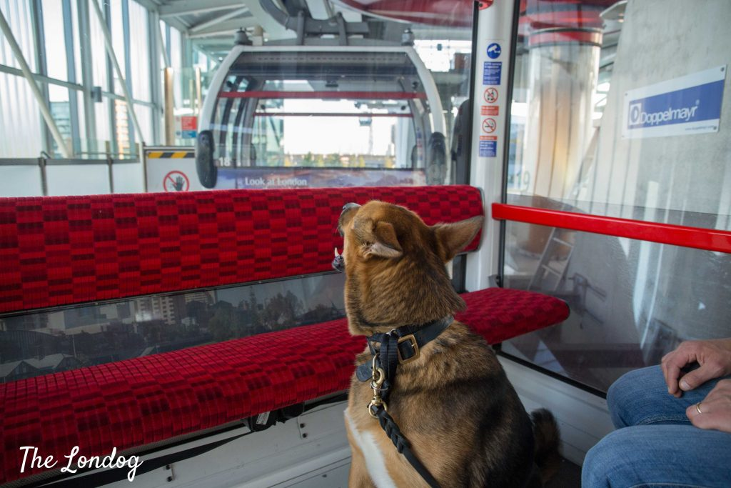 Dog on board of Emirates cable car