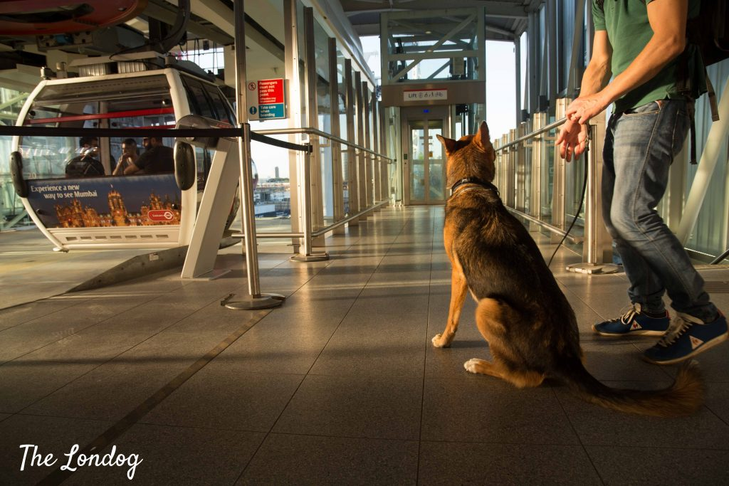 Dog waiting from Emirates cable car at Greenwich Peninsula terminal
