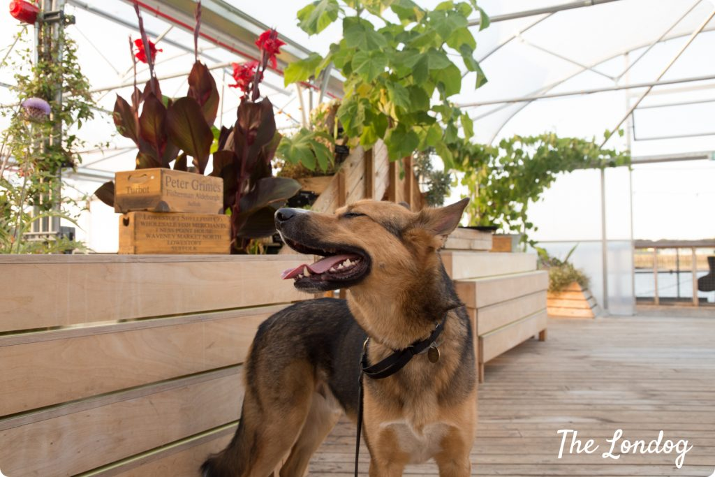 Dog-friendly Vagabond Food Cafe London