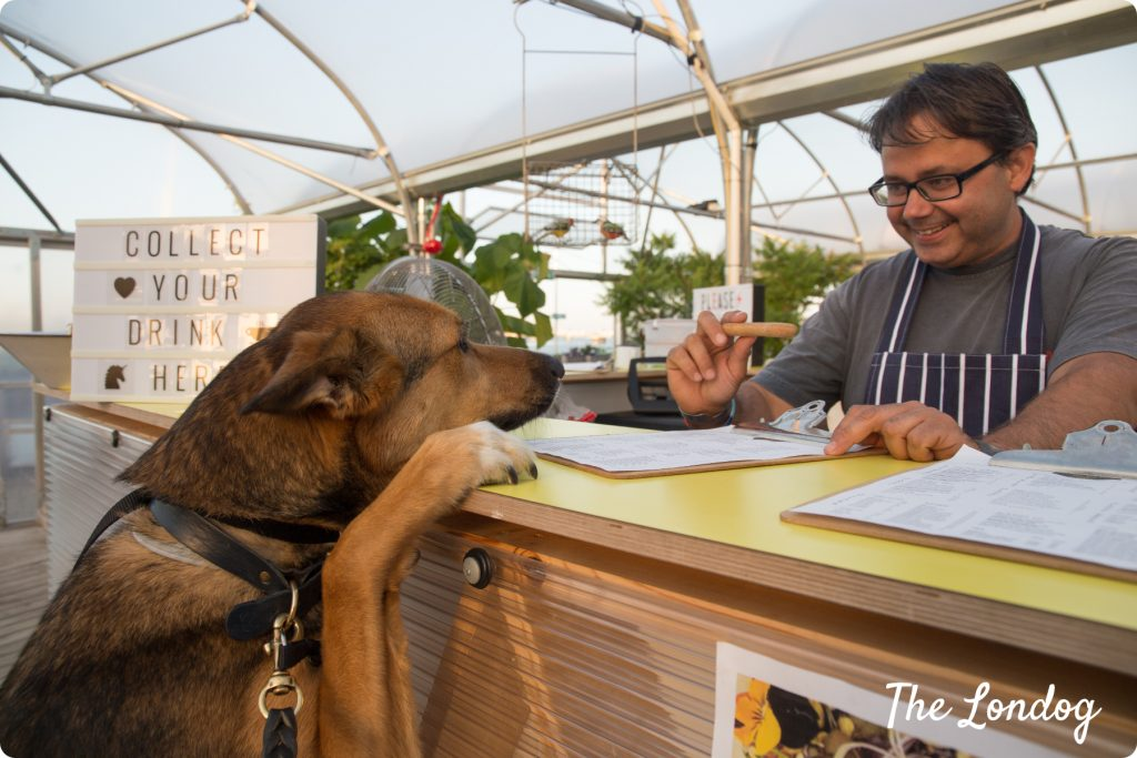 Dog-friendly Vagabond Food Cafe the Jetty Greenwich