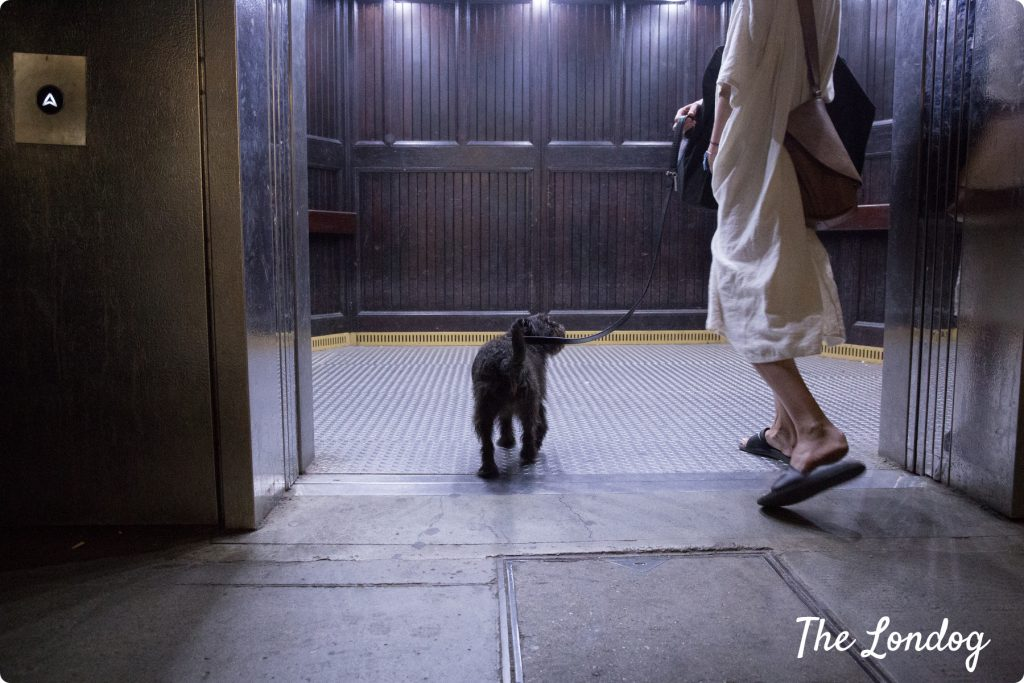 Dog lift Greenwich Foot Tunnel