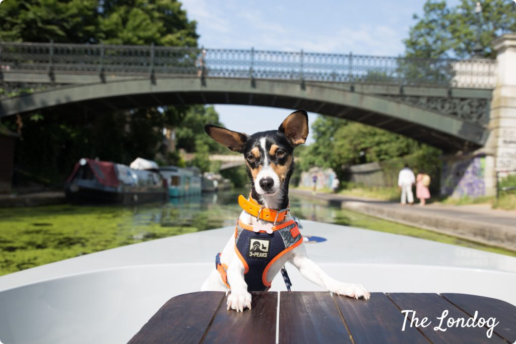 Dog on boat Regents canal london