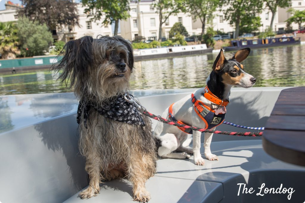 Dogs on boat Regents Canal