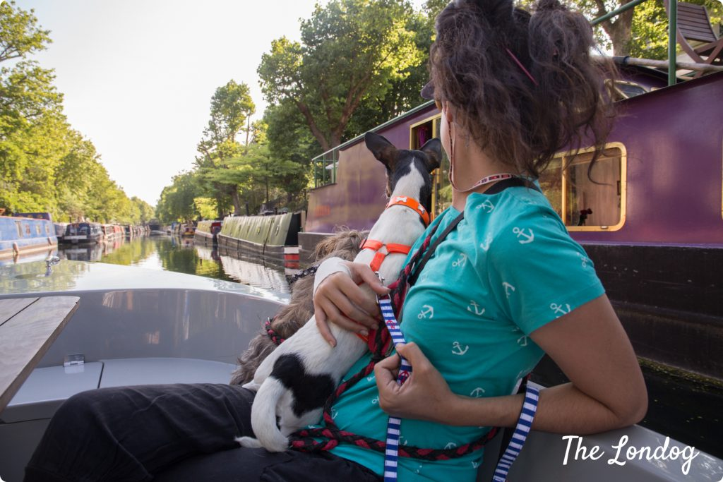 Dogs on dog-friendly boat on Regents Canal
