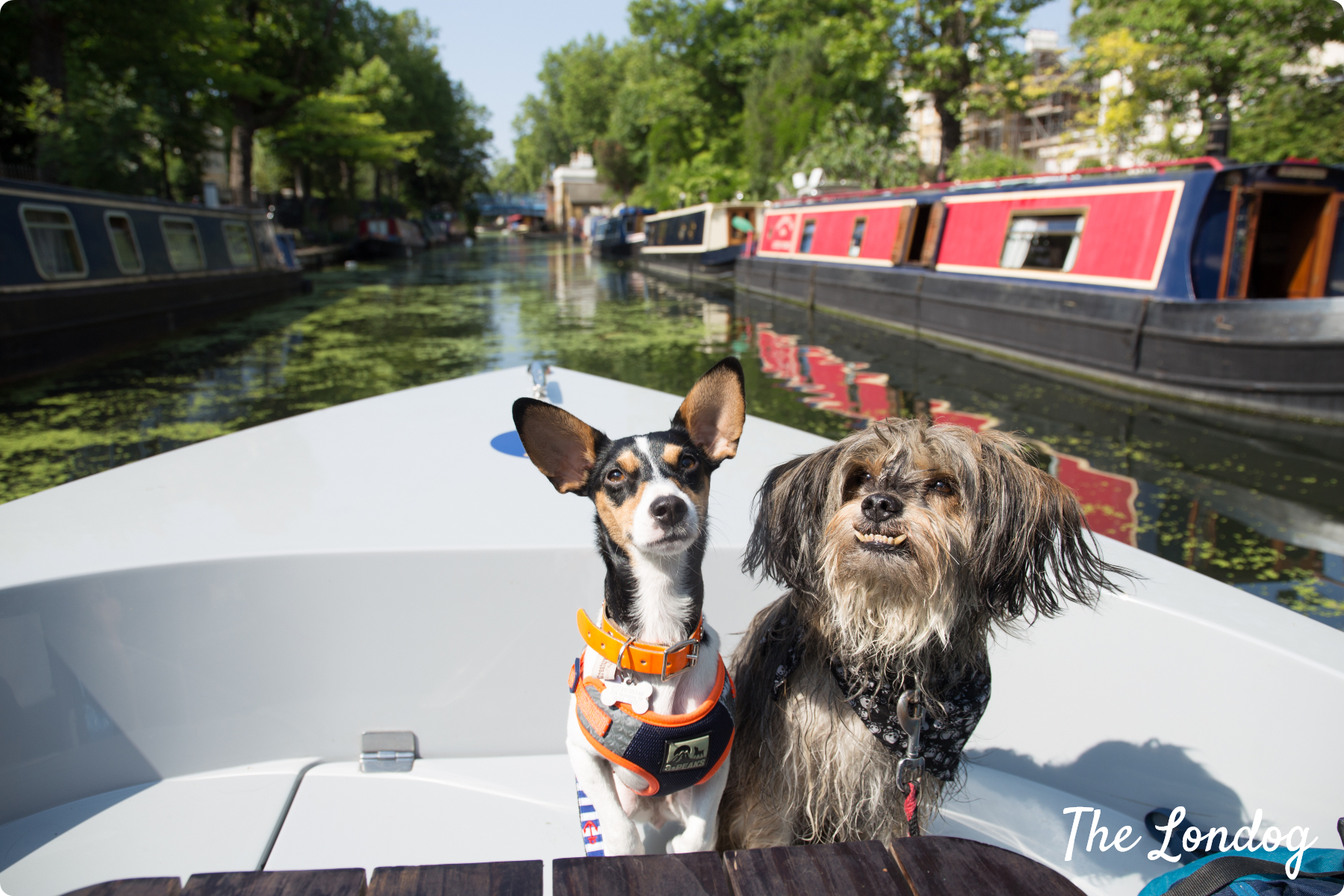 Dogs on dog-friendly boat on Regents Canal in London