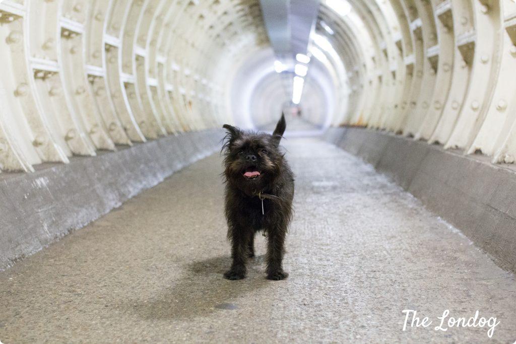 Frida dog Greenwich Foot Tunnel
