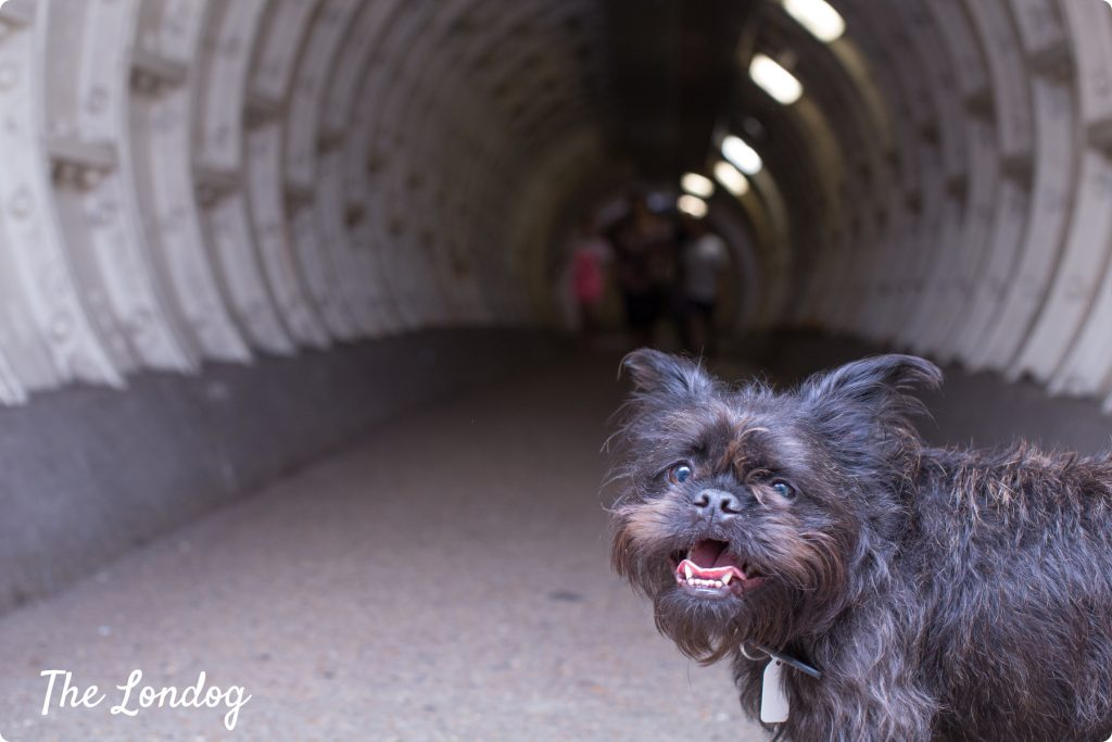 Frida the Grenchie dog Greenwich Foot Tunnel