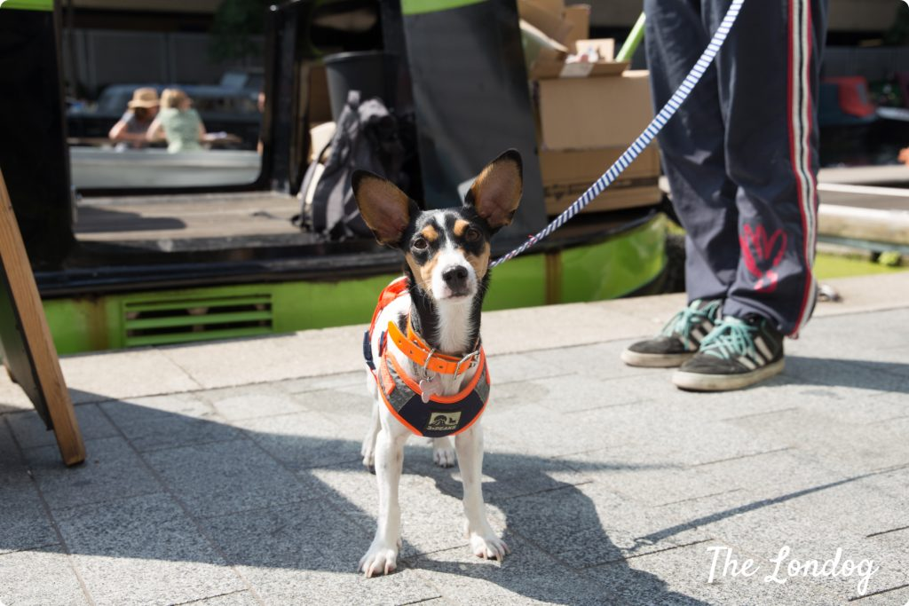 Glitch the dog at the mooring of GoBoat London