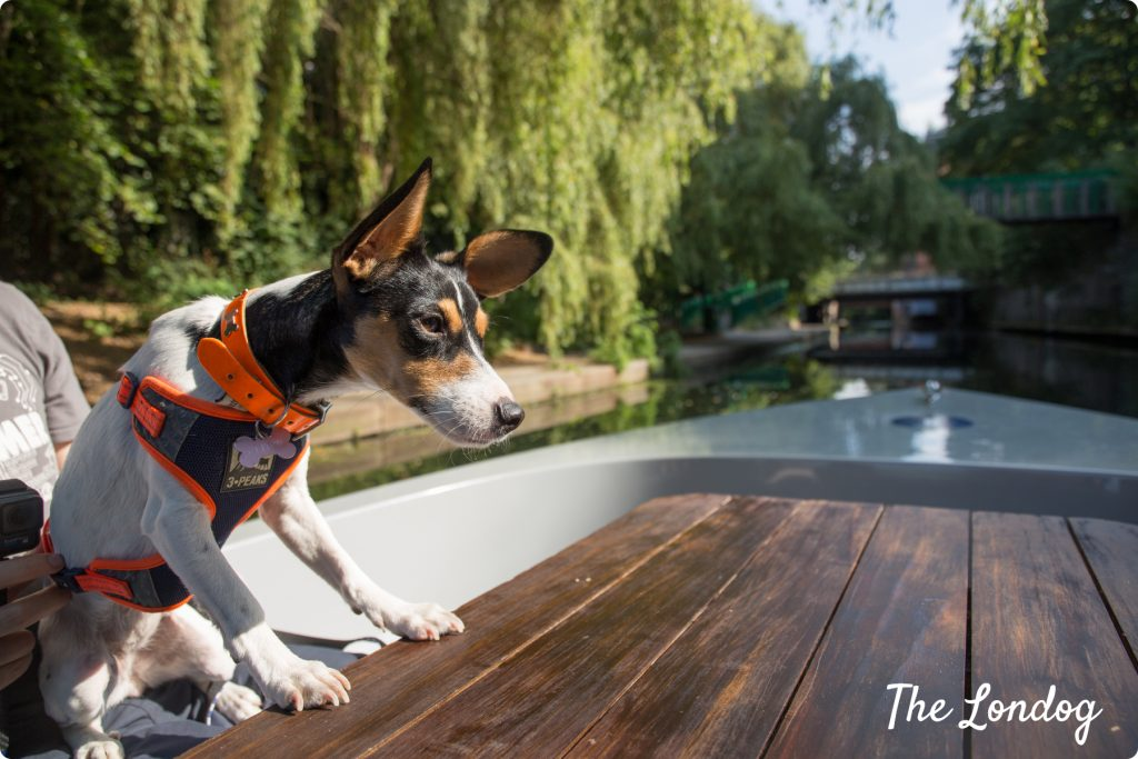 Glitch rescue dog on dog-friendly boat Regents Canal