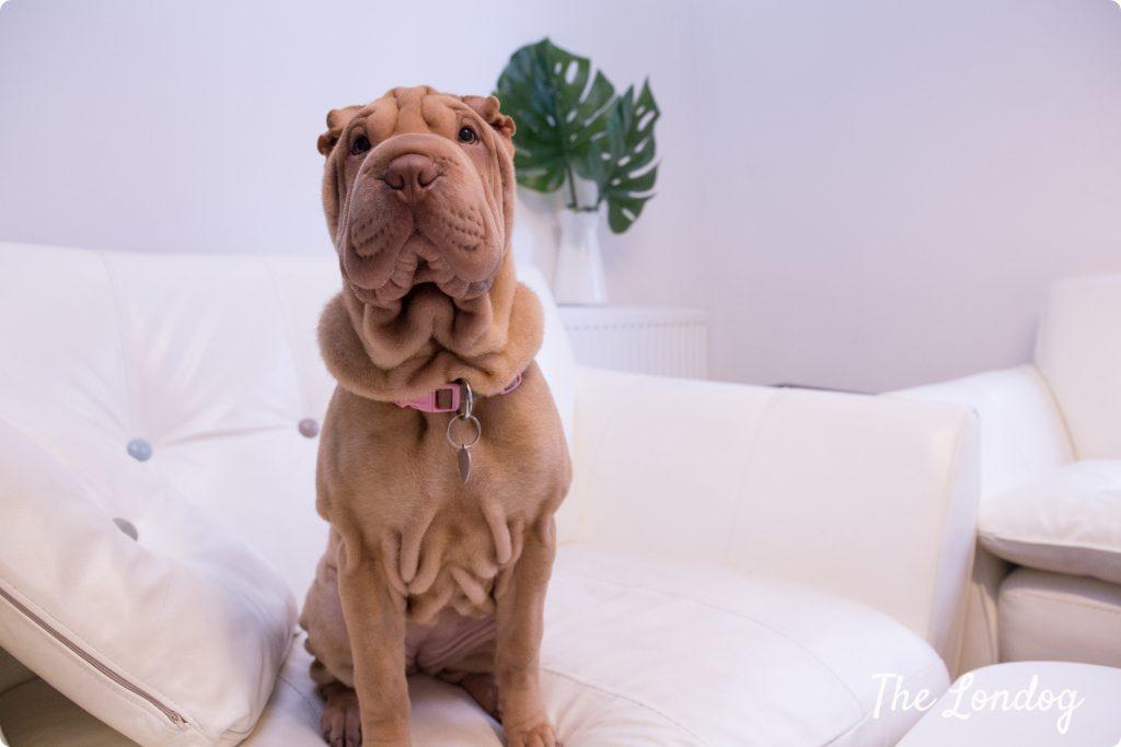 Office dog Funzing UK