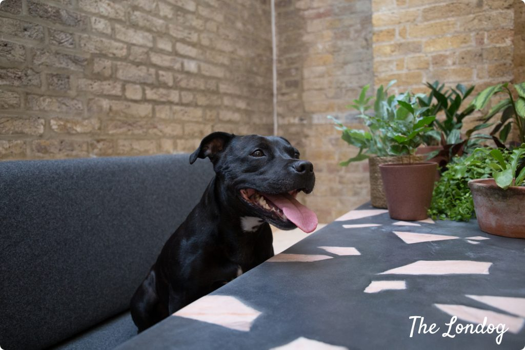 Office dog sitting at a table at the workplace