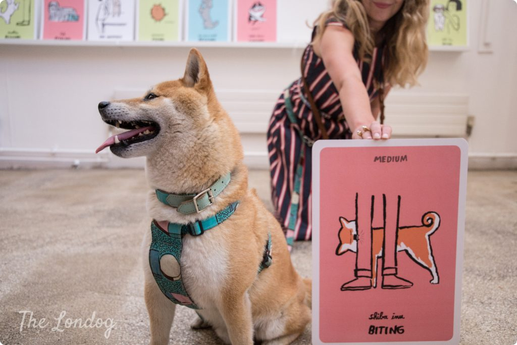 Shiba Inu at Dodgy Dogs launch at Mother London