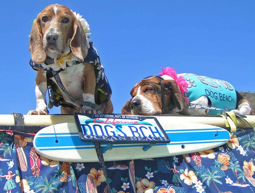 The Doggie Paddle Brighton