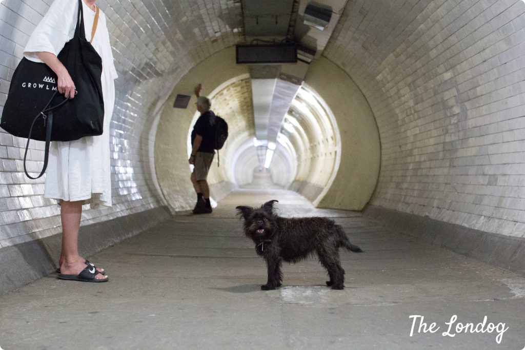 dog at Greenwich Foot Tunnel