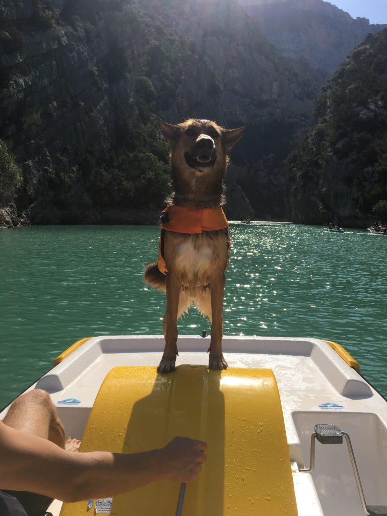 Dog on pedalo