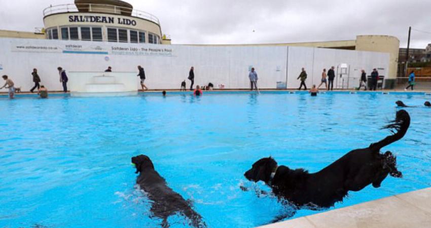 Saltdean Lido dog swim