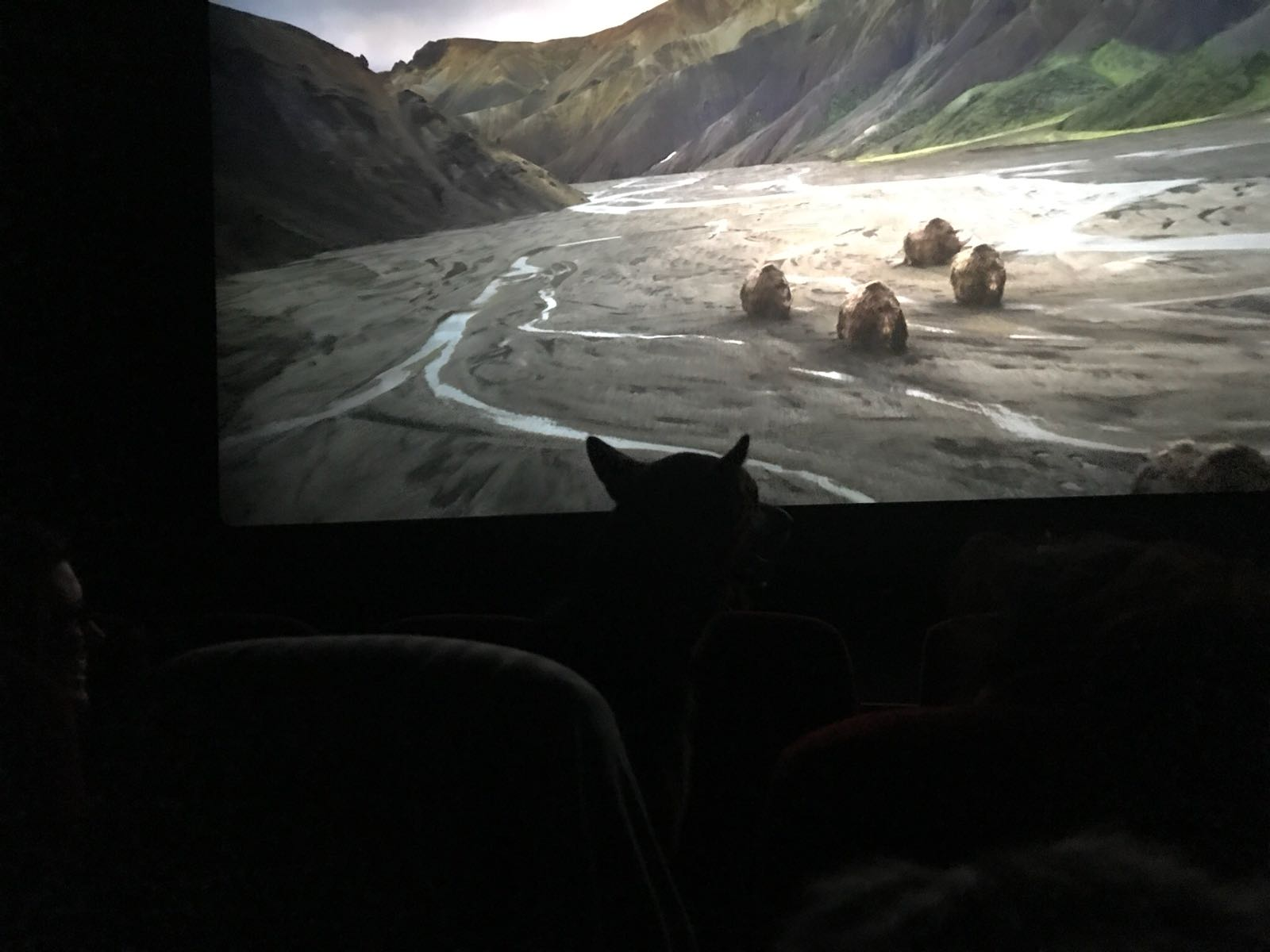Silhouette of dog watching a film at the cinema