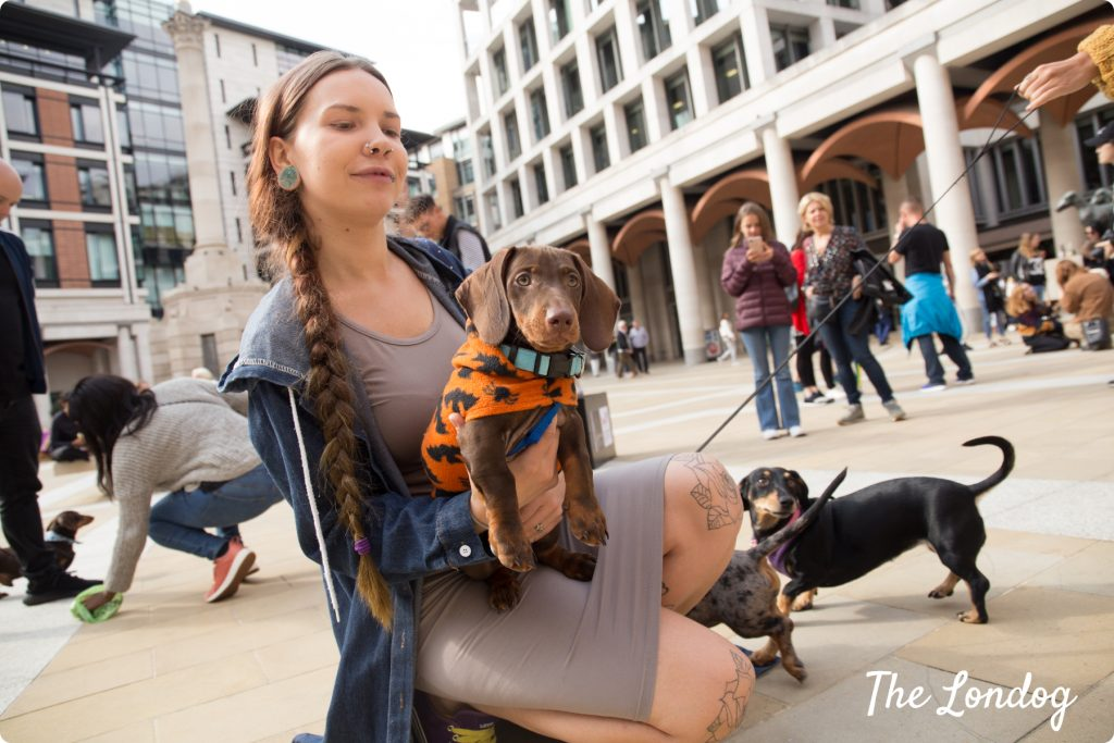 Dachshund puppy at St Paternoster Square