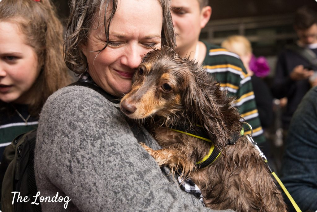Wet daxie in the arms of his owner at the Sausage Dog Parade