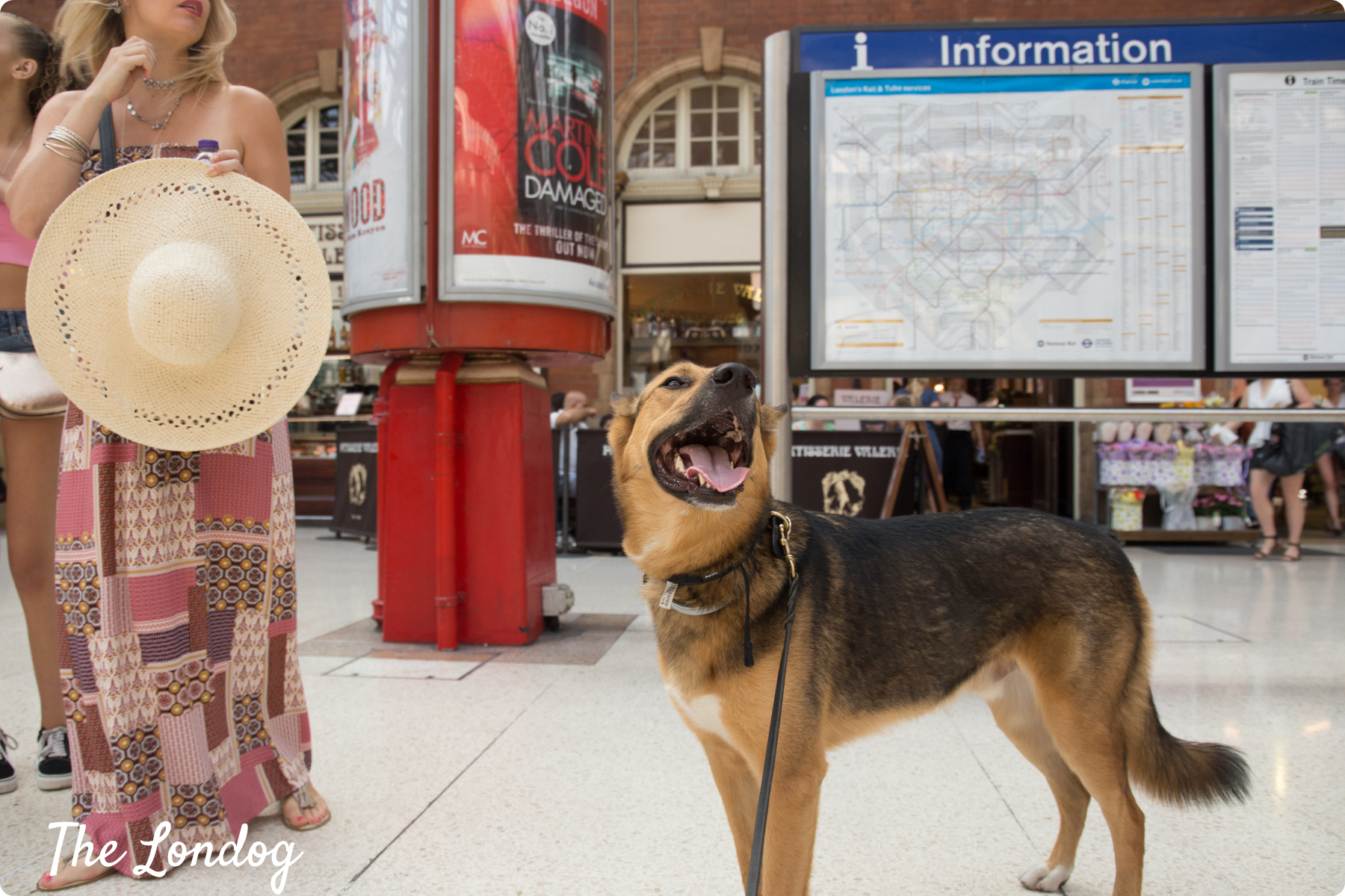 Dog at Marylebone station