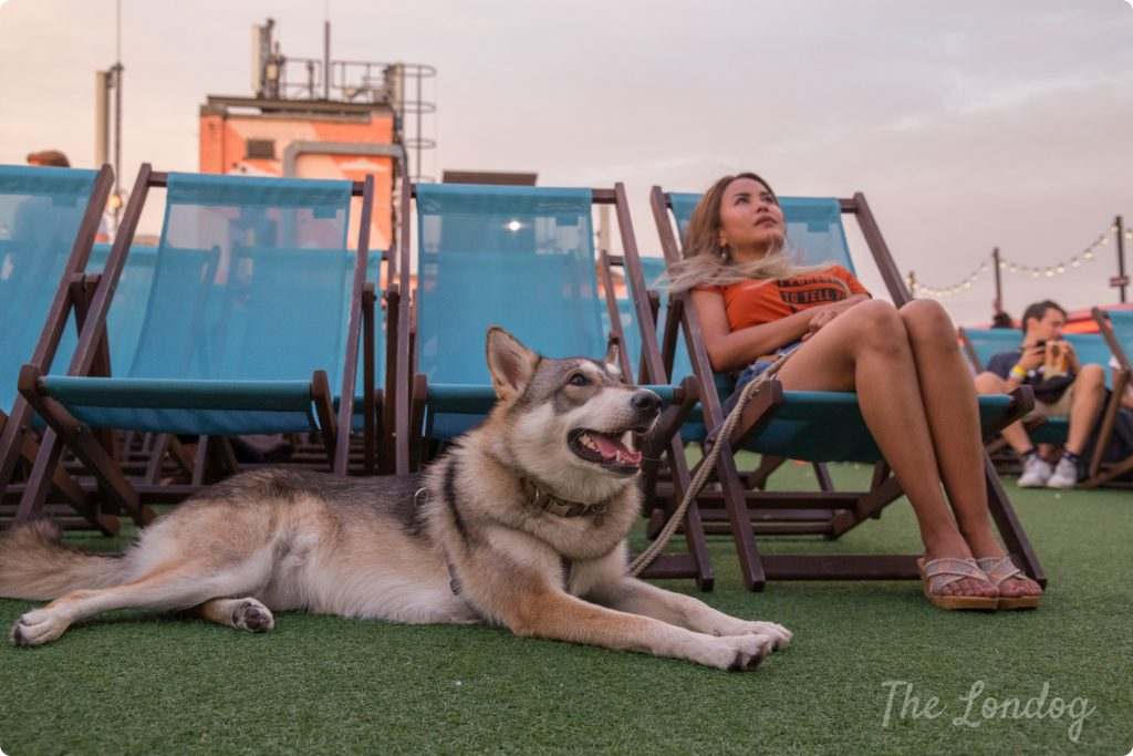 Dog-friendly cinema at Rooftop Film Club London